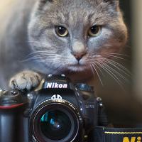Личная фотография Артёма Моськина