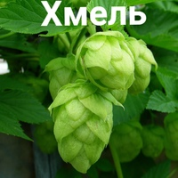 Личная фотография Андрея Сибирякова