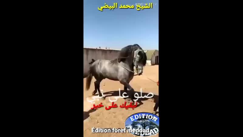 Med El Baidhi Nbakik Ala Kheir الشيخ محمد البيضي نبقيك على خير عودي 360p mp4