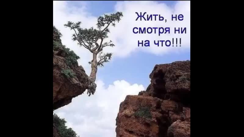 Video_1709432640956.mp4