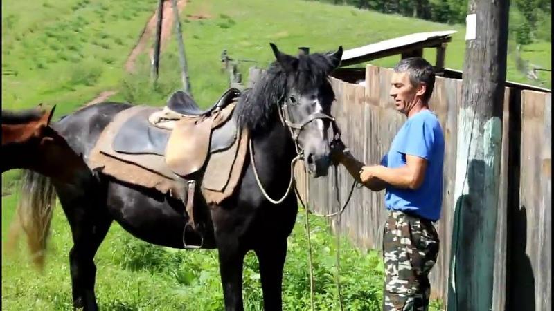Десятилетняя девочка учится седлать коня и пробует себя в роли всадницы