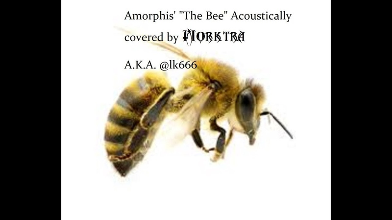 Acoustic Cover of Amorphis' The Bee