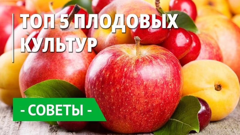 Плодовые плантации Беккер Топ 5 плодовых культур для каждого сада