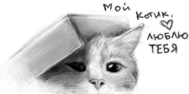 Люблю котика своего картинки