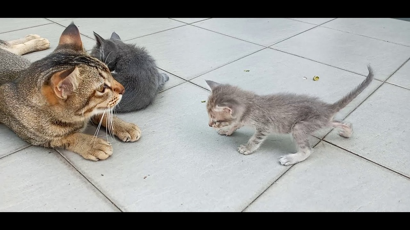 Cats are 1142,and, the 3 Generation are 662, 514 ,388 and Young lady grandchild 89 ,140, 34days old