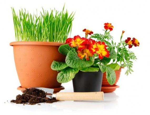 Главные правила пересадки комнатных растений