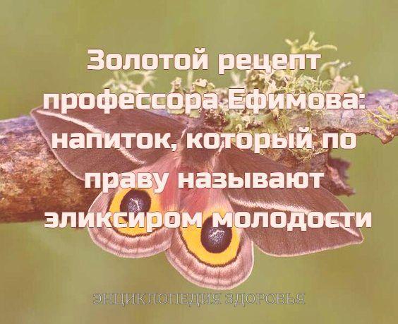 Золотой рецепт профессора Ефимова: напиток, который по праву называют эликсиром молодости