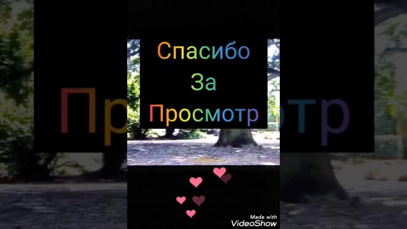 Влад Бахов Связь Юрьева и близкие друзья